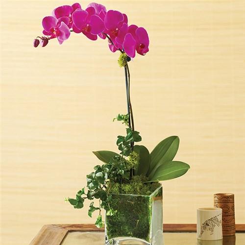 Conroy S Flowers Fresno Local Florist Fresno Ca